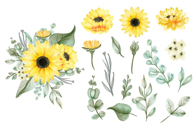 Satz isolierte gelbe sonnenblumen und blätter des aquarells