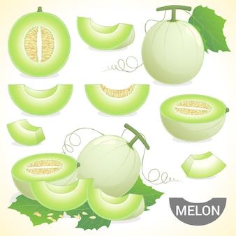 Satz kantalupenblatthonig-honigmelonenfrucht im verschiedenen artvektorformat