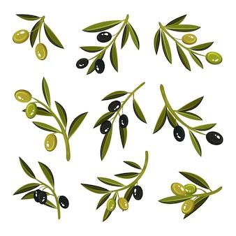 Satz kleiner zweige mit blättern, grünen und schwarzen oliven. natürliches und gesundes produkt. bio-lebensmittel