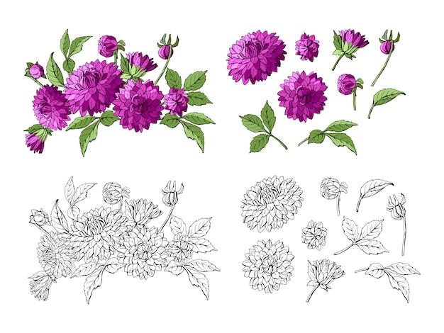 Satz lila dahlienstrauß