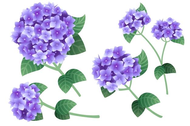 Satz lila hortensienblüten mit grünen stielen und blättern, flache vektorgrafiken