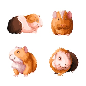 Satz meerschweinchen.