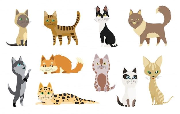 Satz nette karikaturkätzchen oder -katzen mit unterschiedlichem farbigem pelz und markierungen, die sitzend stehen