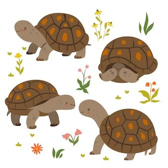 Satz nette schildkröten lokalisiert auf einem weißen hintergrund. vektorgrafiken.