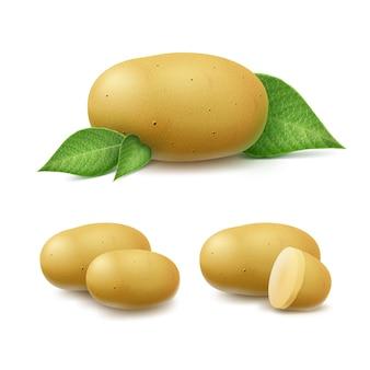 Satz neue gelbe rohe ganze ungeschälte und geschnittene kartoffeln mit blättern schließen oben lokalisiert auf weißem hintergrund