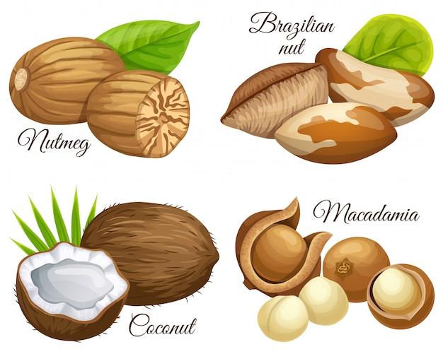 Satz nüsse muskatnuss, brasilianer, macadamia, kokosnuss