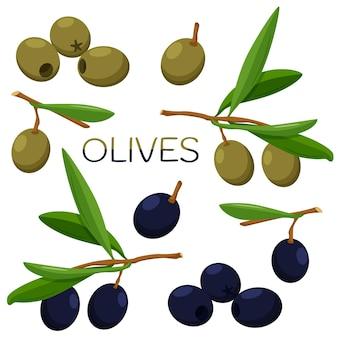 Satz oliven. oliven auf einem zweig mit blattillustration auf einem weißen hintergrund.