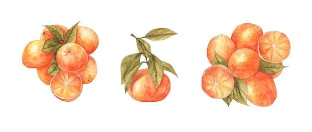 Satz orangenfrüchte mit blatt. aquarellillustration.