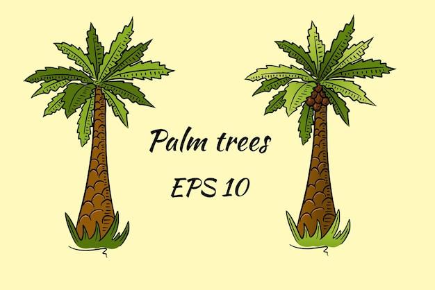 Satz palmen im karikaturstil. zwei palmen, eine mit kokosnüssen, die andere ohne.