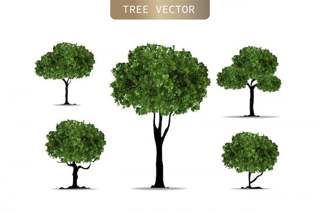 Satz realistische bäume auf weißem hintergrund.