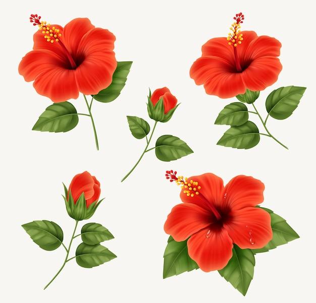 Satz realistische schöne hibiskusblüte mit knospen und blättern. illustration mit hibiskusblüte