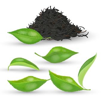 Satz realistische teeblätter mit frischem grünem und getrocknetem laub auf weißer hintergrundillustration. haufen schwarzen trockenen tee