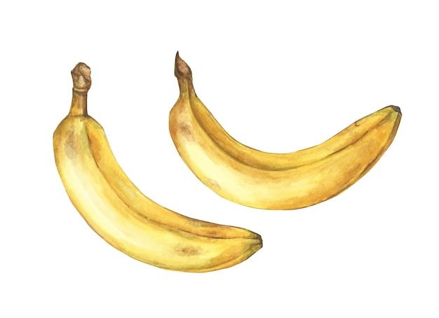 Satz reife bananen auf weißem hintergrund. hand gezeichnete aquarellillustration.