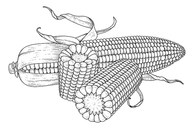 Satz reife maishand gezeichnete illustration