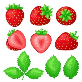 Satz reife saftige erdbeeren. ganze beerenfrüchte und scheiben in verschiedenen formen. grüne blätter.
