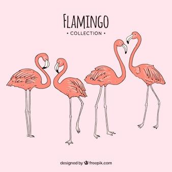 Satz rosa flamingos mit verschiedenen lagen
