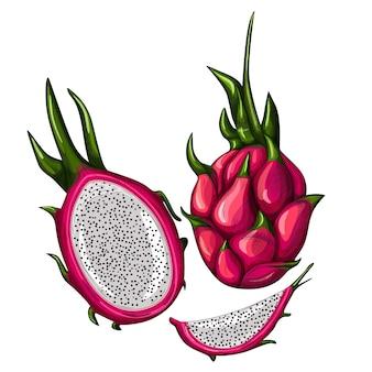 Satz rote drachenfrucht lokalisiert auf weißem hintergrund. ganz, halb und in scheiben schneiden.