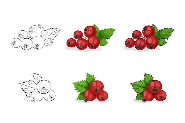 Satz rote johannisbeeren mit blättern isoliert auf weiß