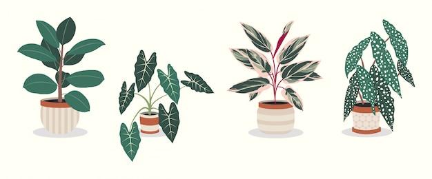 Satz schöne zimmerpflanzen in töpfen