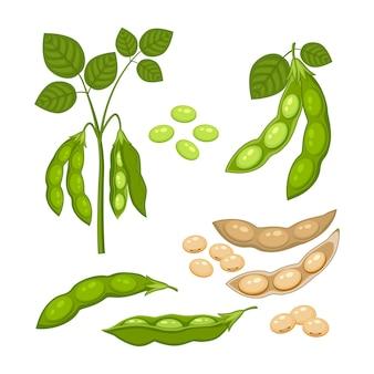 Satz sojabohnenpflanze mit reifen hülsen und grünen blättern, ganzen und halben grünen und trockenen braunen hülsen, sojasamen lokalisiert auf weißem hintergrund. bush der hülsenfruchtpflanze in einer flachen karikaturart.