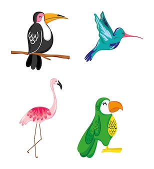 Satz sommer exotics vögel