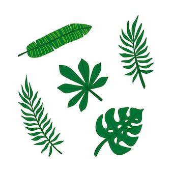 Satz tropische blätter, monstera, fatsia, banane, areca. dschungellaub. grüne palmblätter auf dem weißen hintergrund isoliert. tropische vektorillustration.