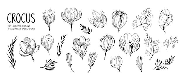 Satz umrissfrühlingsblumen und -pflanzen, krokusblumen. hand gezeichnete illustration lokalisiert auf weiß