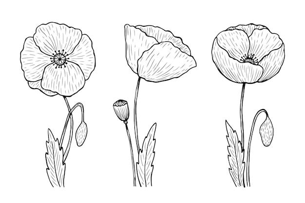 Satz umrissmohnblumen lokalisiert auf weiß