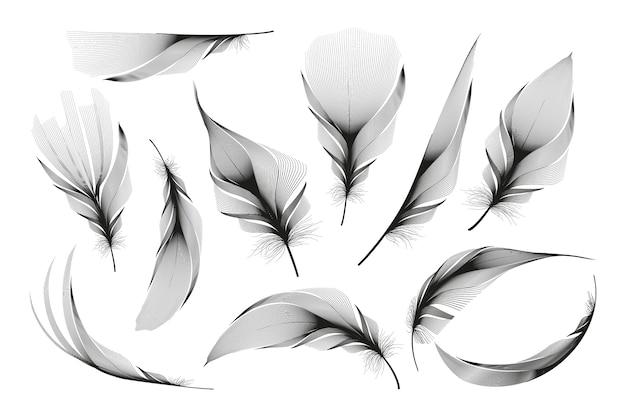 Satz verschiedene fallende flauschige wirbelnde federn auf einem weißen hintergrund
