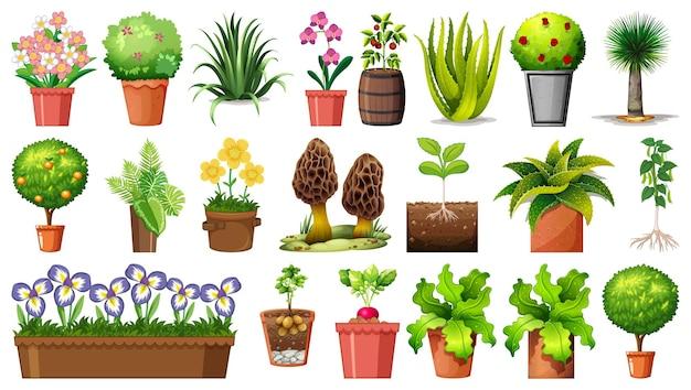 Satz verschiedene pflanzen in töpfen lokalisiert auf weißem hintergrund