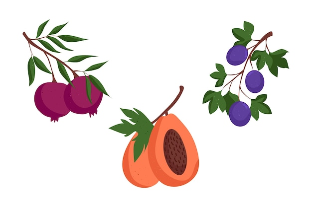 Satz verschiedener obstzweige mit granatapfelzweig mit passionsfrucht-papaya