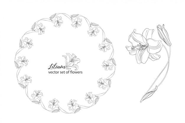 Satz von blumen und lily knospen.