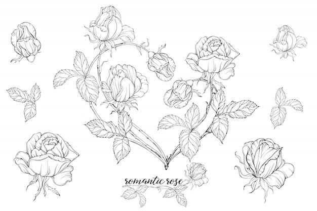 Satz von blumenkompositionen mit rosenblüten.