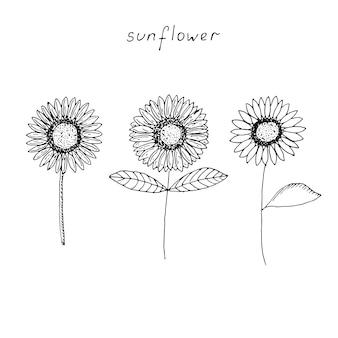 Satz von drei sonnenblumen, vektorillustration, handzeichnung, skizze