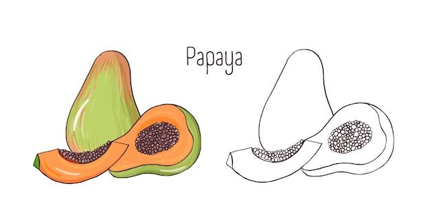Satz von farbigen und monochromen umrisszeichnungen der ganzen und geschnittenen papaya lokalisiert auf weiß