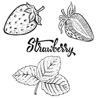 Satz von hand gezeichnete erdbeere. elemente für logo, etikett, emblem, zeichen, poster, menü. illustration.