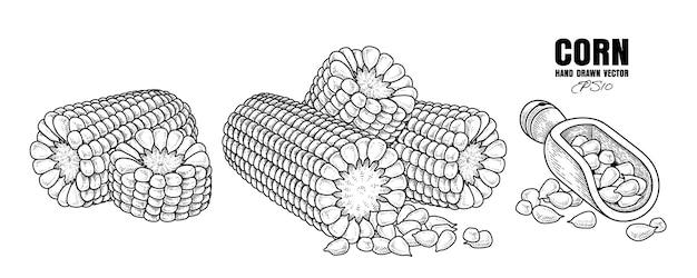 Satz von hand gezeichnete skizzenelementillustration des reifen maises