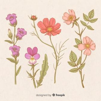 Satz von hand gezeichnete weinleseblumen