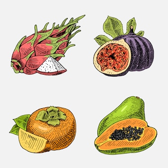 Satz von hand gezeichneten, gravierten frischen früchten, vegetarischem essen, pflanzen, weinlese, die gemeinsame feige, kakis und pitaya, papaya sieht.