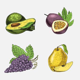 Satz von hand gezeichneten, gravierten frischen früchten, vegetarischem essen, pflanzen, weinlesetrauben, passionsfrucht, quitte und avocado