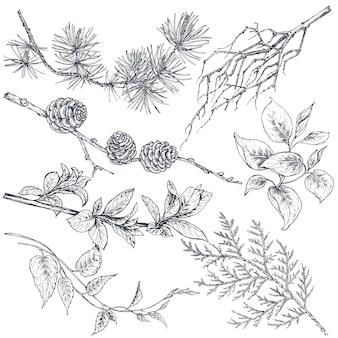Satz von hand gezeichneten tintenskizzenfrühlingsniederlassungen, -pflanzen mit blättern und blumen lokalisiert auf weißem hintergrund. schöne vektorsammlung
