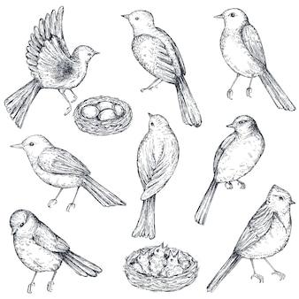 Satz von hand gezeichneten tintenskizzenvögel, nest, küken, solated auf weißem hintergrund. schöne vektorsammlung