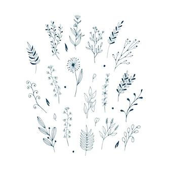 Satz von handgezeichneten wildblumenelementen des botanischen blattgekritzels