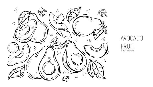 Satz von handzeichnung avocado. für etiketten, speisekarten, design, poster und druck