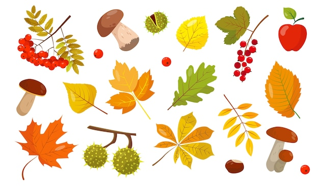 Satz von herbstelementen. blätter, pilze und beeren auf weißem hintergrund für den herbst. illustration.