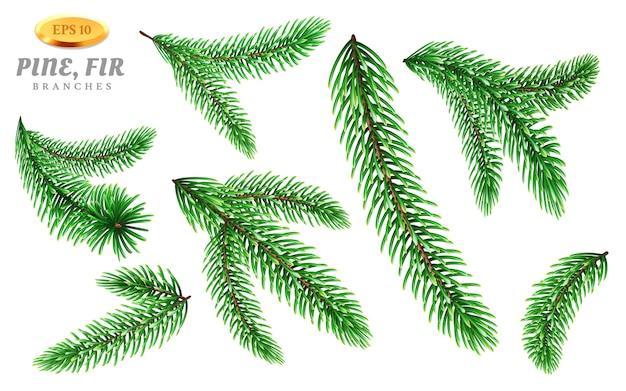 Satz von isolierten kiefernzweigen oder tannenzweig. immergrüne oder nadelpflanzenteile mit nadeln oder stachelfichte.