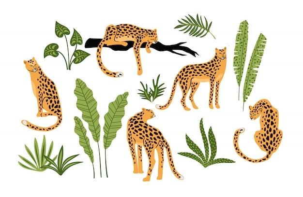 Satz von leoparden und tropischen blättern.