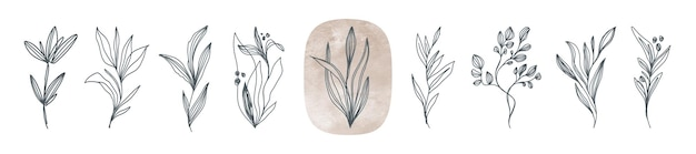 Satz von linienkunstblumen und -pflanzen handgezeichnete florale designelemente im botanischen und boho-stil