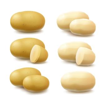 Satz von neuen gelben rohen ganzen geschälten ungeschälten und geschnittenen kartoffeln schließen oben auf weißem hintergrund