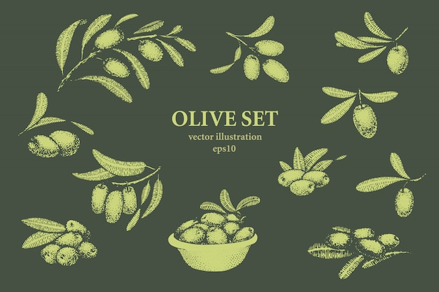 Satz von olivenzweig. hand gezeichnete art des stiches. vektorweinleseillustrationen